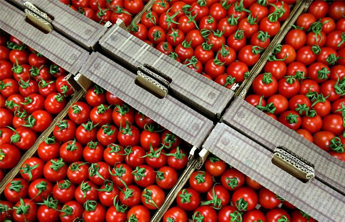 Сотни тонн санкционных продуктов будут уничтожены 6 августа