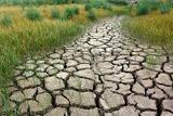 В РФ площадь гибели посевов от засухи выросла до 1,7 млн га