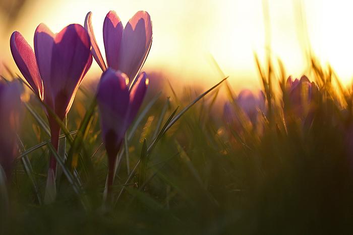 Россельхознадзор пригрозил запретить поставки цветов из Словакии и Чехии