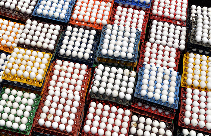 Железорудная компания из Канады занялась перепродажей яиц