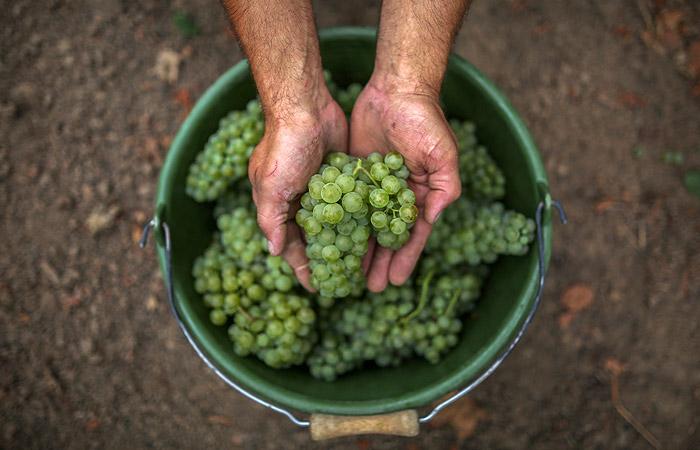 Союз виноделов выступил против запрета на импорт виноматериалов