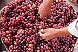 Производители игристых вин предложили обнулить пошлину на ввоз виноматериалов