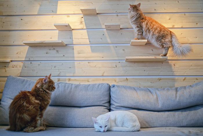 Госдума предложила регионам регулировать количество кошек в квартирах