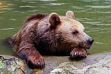 Власти Приморья начали откачивать воду из затопленного зоопарка