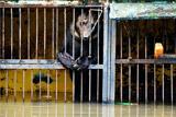 Из клеток зверей в затопленном зоопарке Уссурийска ушла вода