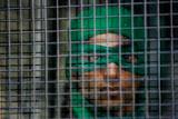 Власти Индии запретили Greenpeace получать деньги из-за рубежа