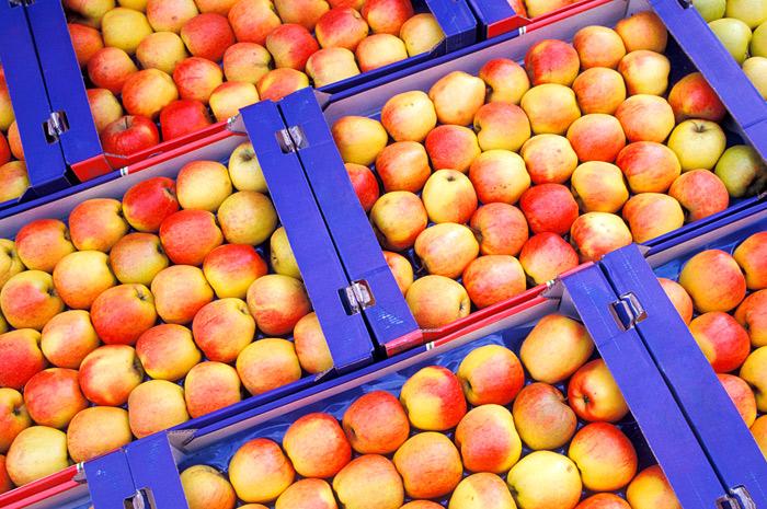 Российские садоводы повысили закупочные цены на яблоки в 2,5 раза