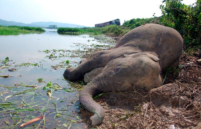 В Зимбабве начали травить слонов с помощью цианида