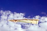 """Банки-кредиторы """"Трансаэро"""" проведут независимый аудит компании"""