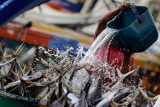 """Госсовет РФ рассмотрит появление в рыболовстве """"инвестиционных квот"""""""