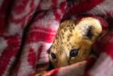 """Замерзающим львам из крымского парка """"Тайган"""" отправили генераторы"""