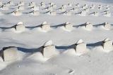 Число жертв снегопадов в восточной части США достигло 36 человек