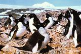 Гигантский айсберг погубил колонию пингвинов в Антарктиде