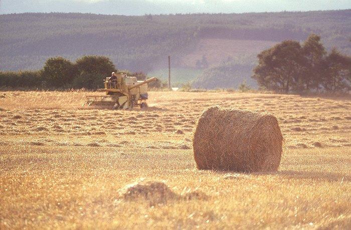 На Украине продадут десять тысяч гектаров земель сельхозназначения
