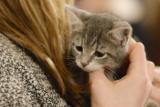 Жильцов дома в Биробиджане эвакуировали из-за сумки с котятами