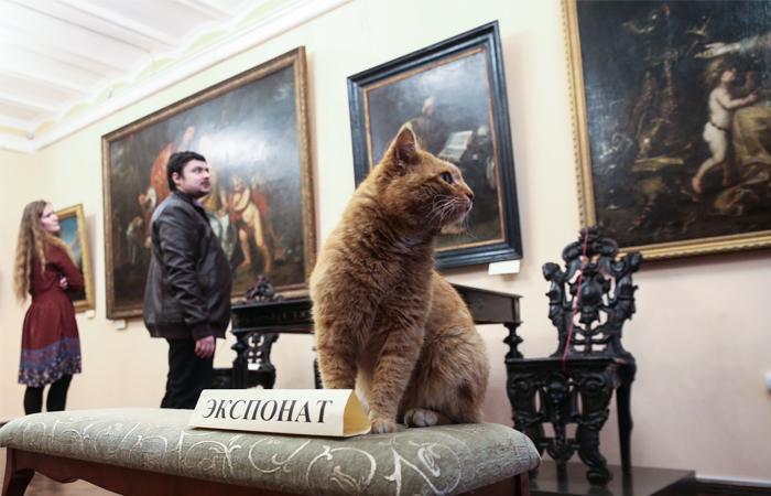 Кот получил должность швейцара в Серпуховском музее