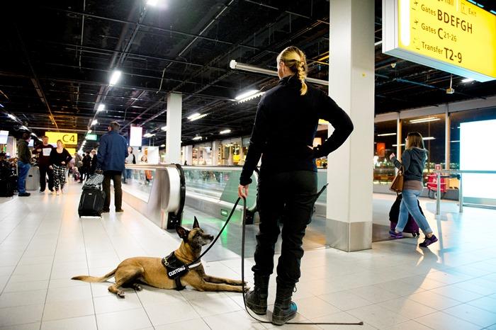 Аэропорт Амстердама частично эвакуирован по соображениям безопасности