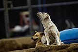 Зоозащитники нашли в подмосковной Ивантеевке свалку трупов собак