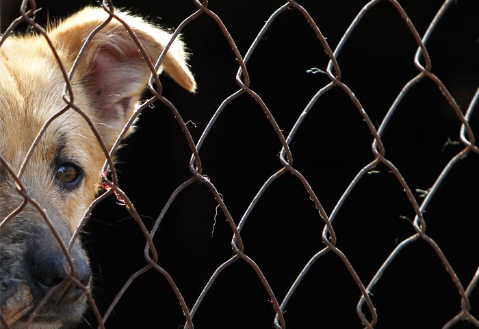 Уголовное дело возбуждено в Москве по факту гибели животных в приюте
