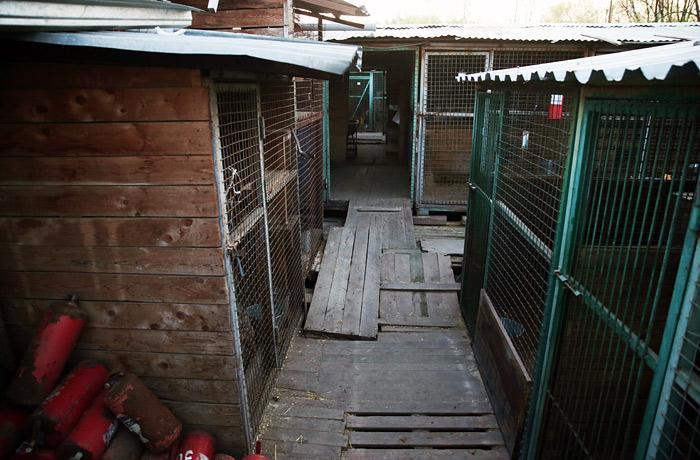 """В калужском приюте владельцев """"Эко Вешняки"""" также найдены трупы собак"""