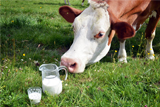 Производители молока возмутились заявлению Россельхознадзора