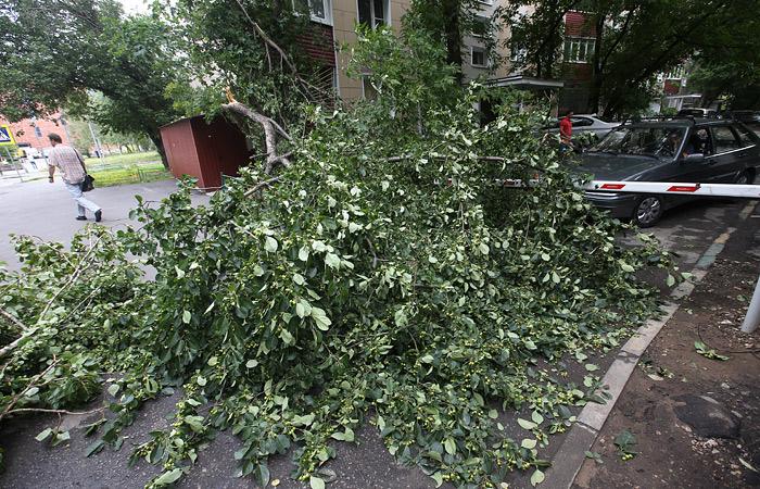 Во время урагана в Подмосковье погиб один человек и 17 пострадали