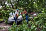 Ночной ураган повалил в Москве более тысячи деревьев