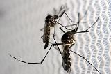 Новые случаи заражения вирусом Зика зафиксированы во Флориде