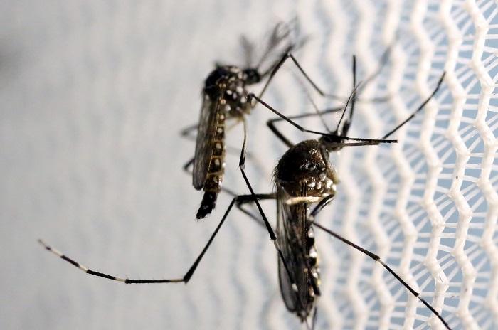 ВоФлориде зафиксированы два новых случая заражения вирусом Зика