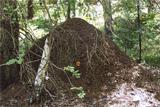 """В калужском нацпарке """"Угра"""" нашли огромный муравьиный город"""