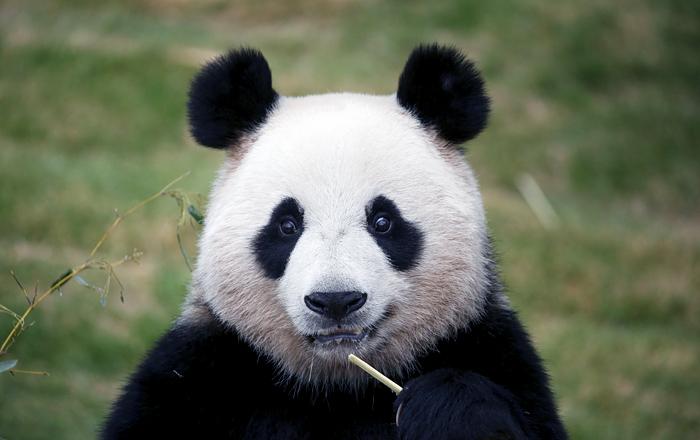Китайские кости  Игры Маджонг онлайн играть бесплатно и