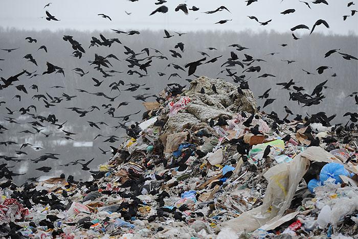 Минприроды РФ сформировало список отходов, захоронение которых запрещается