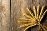 Экспортная пошлина на пшеницу отменена на два года