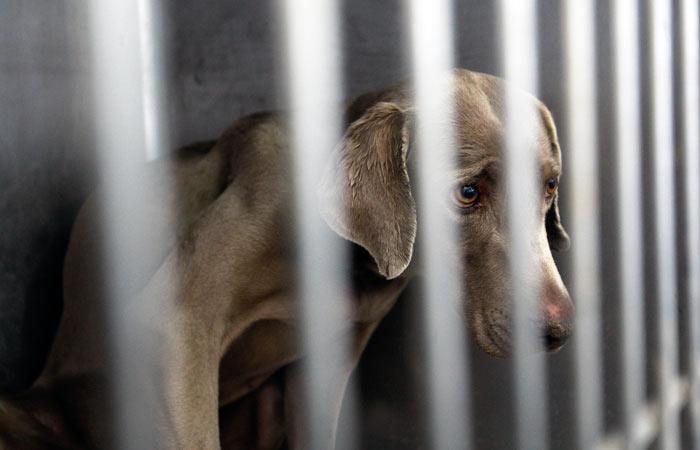 Полиция Хабаровска начала поиск издевавшихся над домашними животными девушек