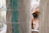 Фигуранткам дела о расправах над животными в Хабаровске ужесточили обвинение