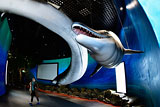 Приморский океанариум подаст в суд из-за обвинений в гибели дельфинов