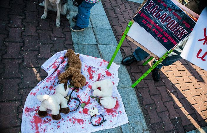 Обвиняемых в расправах над животными девушек арестовали в Хабаровске