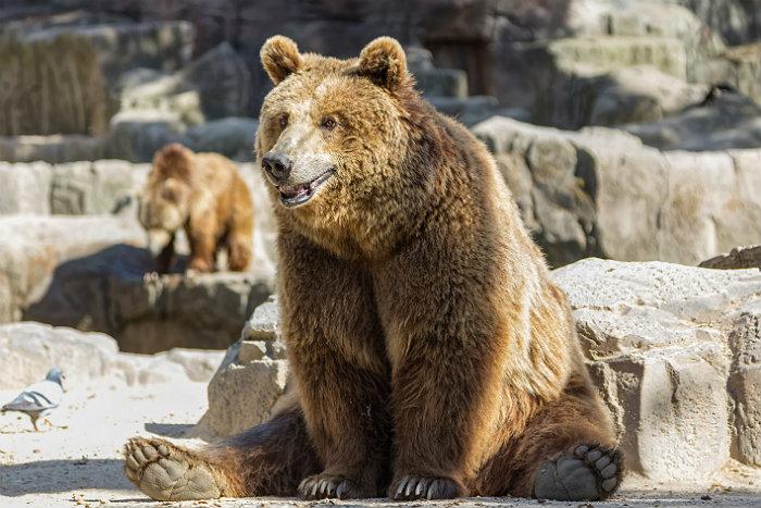 http://www.interfax.ru/ftproot/textphotos/2017/01/14/bear700.jpg