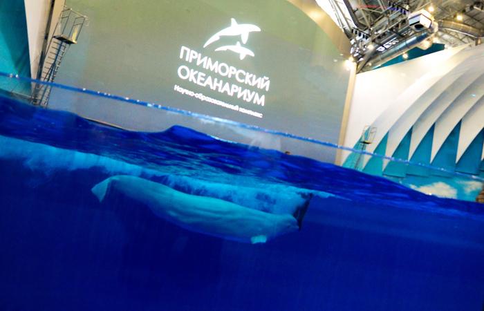Сивуч и дельфины в Приморском океанариуме погибли насильственной смертью