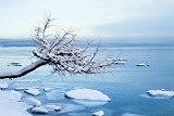 Всех рыбаков сняли с отколовшейся в Охотском море льдины