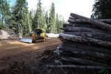 Минприроды захотело упростить механизм строительства в лесных зонах