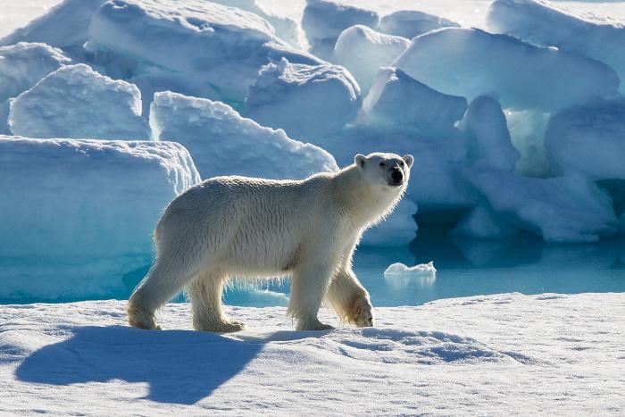 Россия и семь стран договорились о сотрудничестве в Арктике