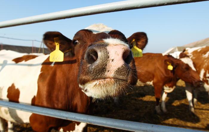 Минсельхоз попросил 36 млрд руб. для продовольственной безопасности