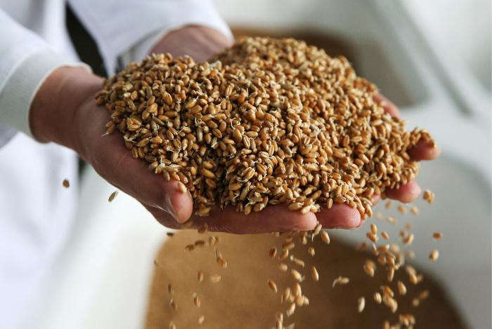 «Ведомости» написали обограничении Турцией импорта пшеницы из РФ