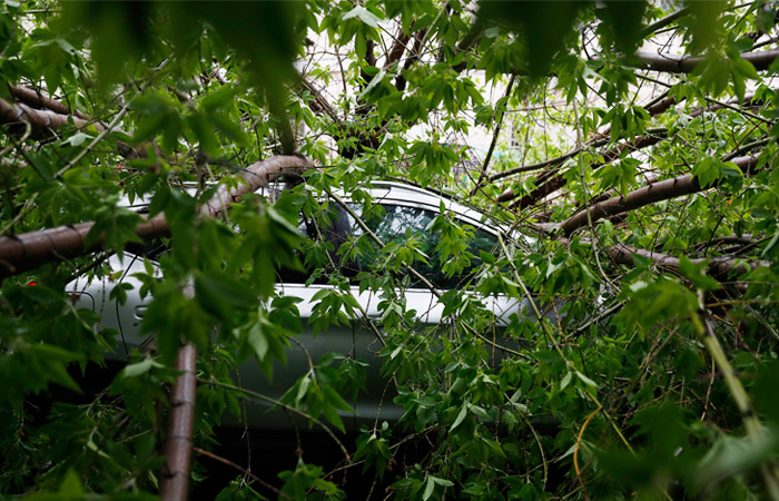 Ураган в Москве стал самым смертоносным за последние десятилетия