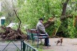 В результате урагана в Москве серьезно пострадали 70 человек