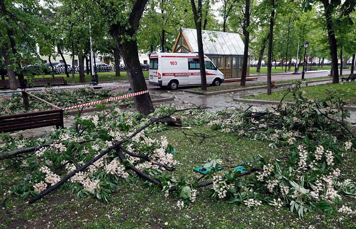Два человека погибли в результате падения деревьев в Москве