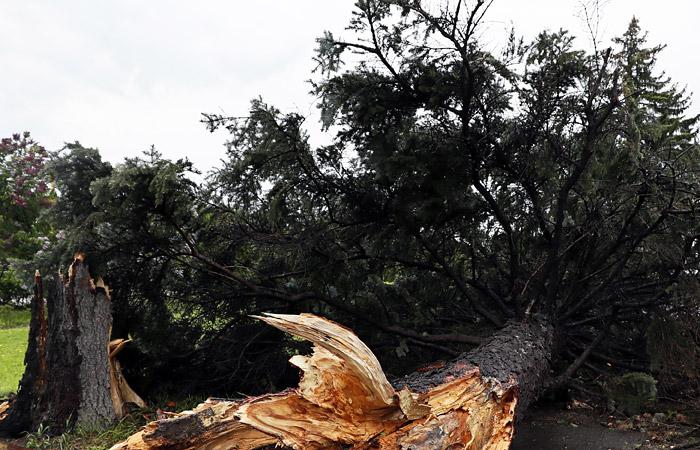 Число жертв урагана в Подмосковье выросло до пяти человек