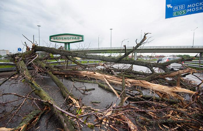Из-за урагана в Москве оказались повреждены более 1,5 тыс. машин