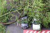 В Подмосковье умер еще один пострадавший во время урагана ребенок